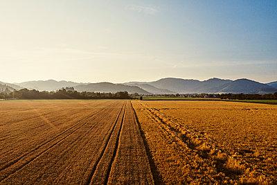 Berge und Getreidefeld im Gegenlicht  - p1312m2103824 von Axel Killian