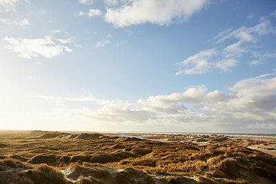 Dune landscape on Römö island, Denmark - p1511m2223040 by artwall