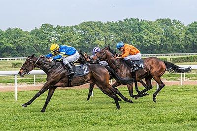 Pferderennen - p401m1465475 von Frank Baquet
