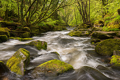 The River Fowey flowing through the moss covered woods at Golitha Falls in spring, Cornwall, England, United Kingdom, Europe - p871m1048037 by Adam Burton