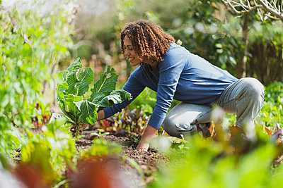 Smiling curly haired woman squatting while picking cauliflower from vegetable garden - p300m2268064 by Steve Brookland