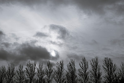 Row of trees against a dark sky - p1228m1491789 by Benjamin Harte