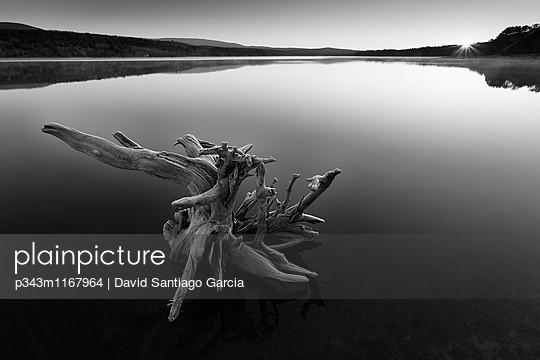 p343m1167964 von David Santiago Garcia