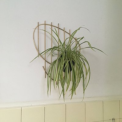 Indoor plant on the wall - p1401m2253756 by Jens Goldbeck