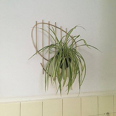 Zimmerpflanze an der Wand - p1401m2253756 von Jens Goldbeck