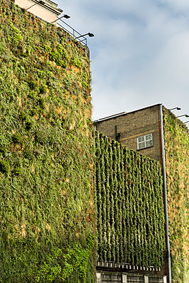 Living wall - p248m1004044 by BY