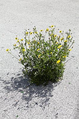 Flowers - p729m907134 by Matthias Schmiedel