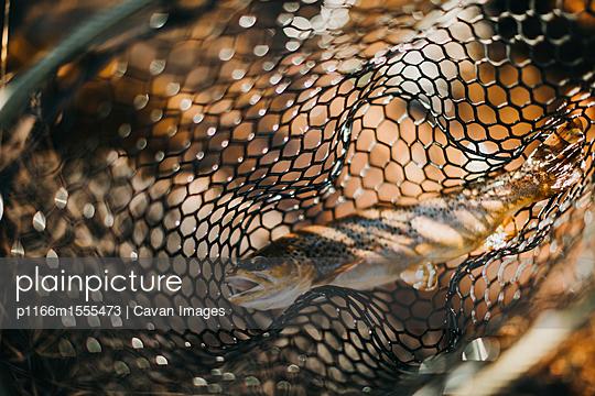 p1166m1555473 von Cavan Images