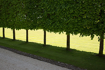 Well trimmed alley trees  - p1057m1425749 by Stephen Shepherd