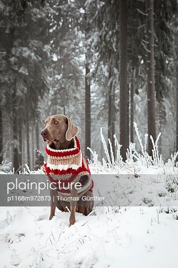 Winterpulli - p1168m972873 von Thomas Günther