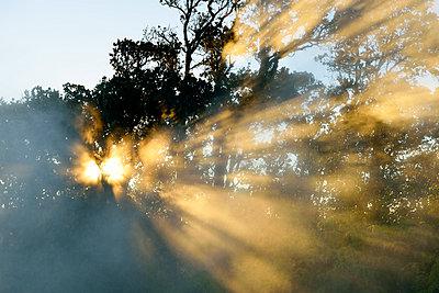 Erleuchtung, Hawaiʻi-Volcanoes-Nationalpark - p1196m1000678 von Biederbick & Rumpf