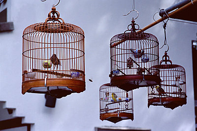 Caged birds for sale, Yuen Po Street Bird Garden, Mong Kok, Kowloon, Hong Kong, China, Asia - p8710721 by Amanda Hall