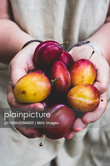 Close up of person holding fresh damsons, fruits. - p1100m2084903 by Mint Images