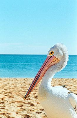 Strandvogel - p1330207 von Martin Sigmund