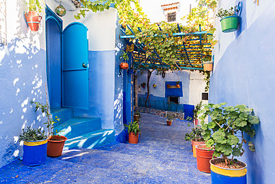 Morocco, Chefchaouen, Blue painted houses and flowerpots  - p1332m2204581 by Tamboly