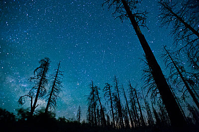 Night sky with trees in foreground, Grand Canyon National Park, Arizona, USA - p429m1450295 by Ben Pipe Photography