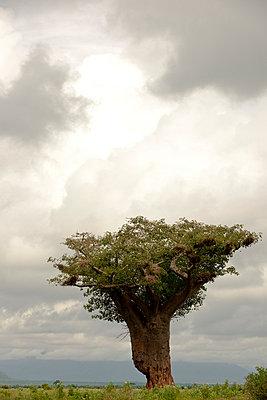 Tsavo West Nationalpark - p5330285 von Böhm Monika