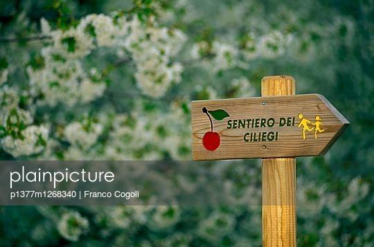 p1377m1268340 von Franco Cogoli