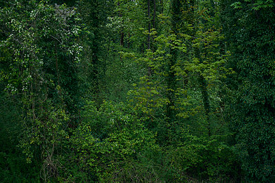 Wald im Frühling - p1312m1333164 von Axel Killian