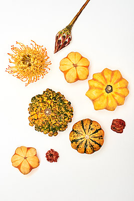 Pumpkins - p1323m1216774 by Sarah Toure