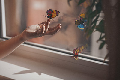 Female hand with butterflies at the window - p1642m2222201 by V-fokuse
