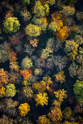 View from above autumn treetops - p301m2016396 by Stephan Zirwes