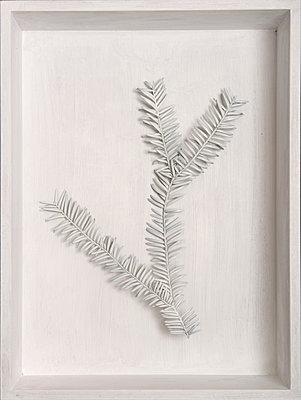 Fir twig - p451m1065830 by Anja Weber-Decker