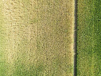 Dürre in Deutschland - p1079m2157744 von Ulrich Mertens