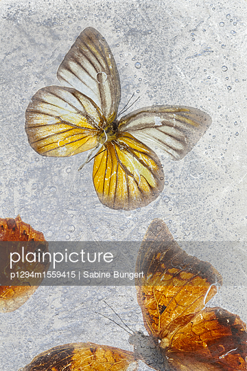 p1294m1559415 by Sabine Bungert
