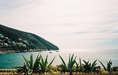 Vue vers la plage du Portet, cactus - p927m2022132 by Florence Delahaye