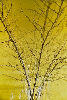 p954m2070995 by Heidi Mayer