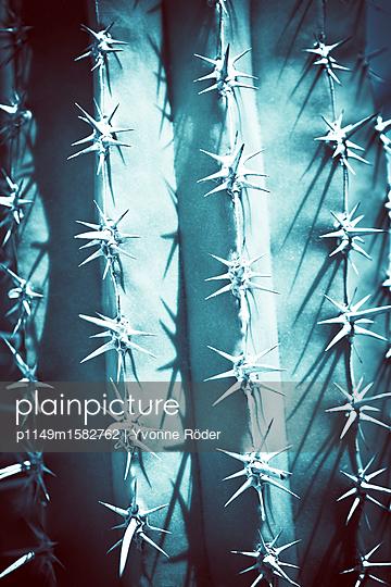 Kaktus in Italien - p1149m1582762 von Yvonne Röder