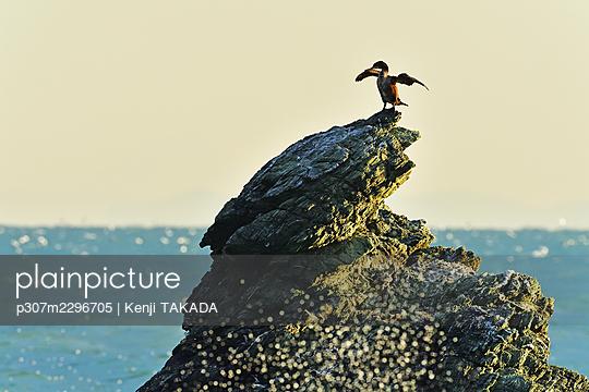 Cormorant - p307m2296705 by Kenji TAKADA