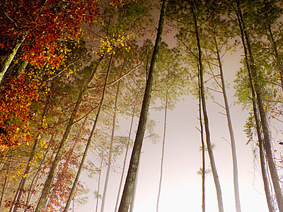Misty Lights in Woods at Night - p6940591 by David Strohl