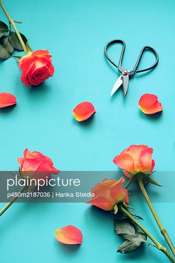 Roses - p450m2187036 by Hanka Steidle