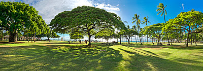 Panoramic View Of Lush Greenery In Waikiki Beach, Honolulu, Hawaii - p343m1417340 by Sean Davey