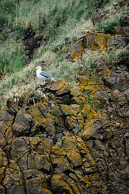 Seagull on Cliff - p1262m1440868 by Maryanne Gobble