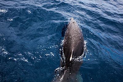 Dolphin - p1291m1465797 by Marcus Bastel