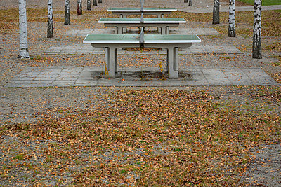 Table tennis in autumn - p876m966717 by ganguin