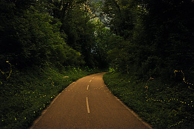Illuminated fireflies flying by road amidst plants and trees in forest during sunset - p1166m2111889 by Cavan Images