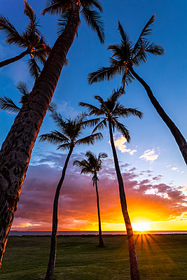 The sun sets behind silhouetted palm trees; Kihei, Maui, Hawaii, United States of America  - p442m1523986 by Jenna Szerlag