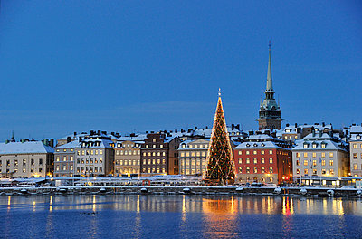 Christmas tree with buildings in background - p5756924 by Stefan Ortenblad