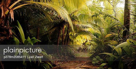 Jungle Trail - p378m2085411 by Jan Zwart