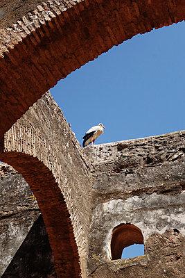 Storch sitzt auf einer Mauer - p1189m1222210 von Adnan Arnaout