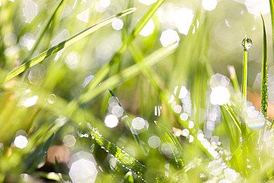 Close up of grass - p6691155 by Julian Winslow