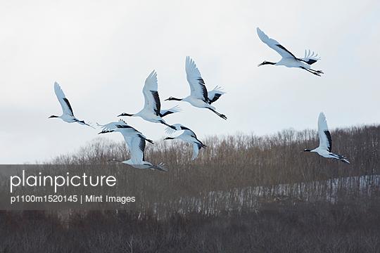p1100m1520145 von Mint Images