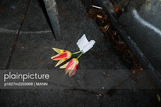 p1627m2203968 by MANN