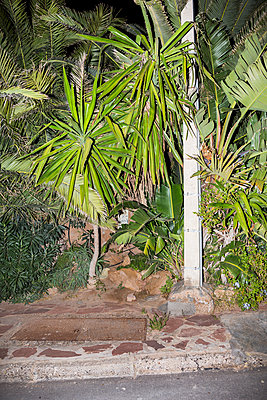 Palm trees at the roadside - p1177m1467453 by Philip Frowein