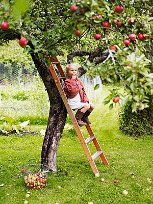 Girl on ladder eating apple, Varmdo, Uppland, Sweden - p312m897198 by Johner