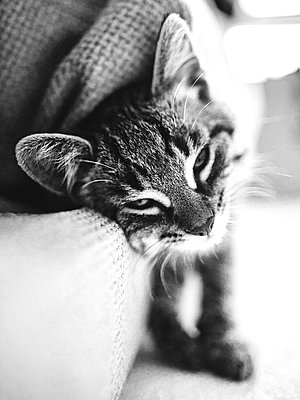Kittens - p1507m2027757 by Emma Grann